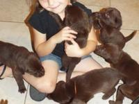 We have two litters of puppies. Ready June 14th and
