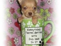 !!! VALENTINES CHIHUAHUA GIRL!!! **Madison** Double