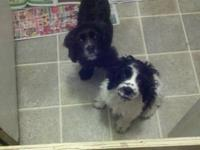 I have 2 sweet little boys that need a good home they
