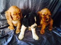 3 blonde males ($350.00) 2 blonde ladies & & 1 black