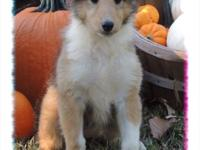 Iridessa is a gorgeous sable, female collie. Birth date