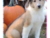 Terence is a gorgeous, sable, male collie. Birth date