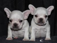 I have 2 AKC french bulldog pups for sale . They are