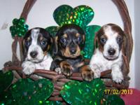 I have 2 litters 6 pups LEFT all are AKC Reg, and will