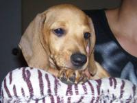 I have one male puppy left (of 5) from a litter we had,