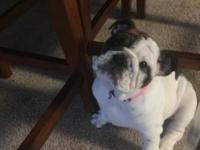 I have an akc English bulldog puppy for sale. Her name