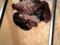 Hi. Our puppies were born on July 30,2014. They will