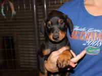 I have 4 female left and 2 males left black and tan