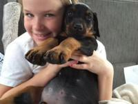 We have beautiful Doberman puppies for sale. Male and