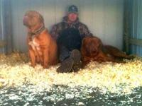 1M/2F left as of 04/28/13 Males-$750-full akc pprs