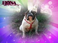 FIONA IS FOR ADOPTION SHE IS AKC REGISTERED. FIONA IS A
