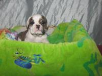 We have 4 baby bulldogs left. Taking deposits now for