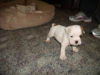 We have a female pup still available to a great home.