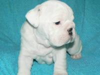 Will be available 11/25/13 for new homes. I male(all
