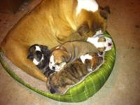 We have 5 attractive puppies: three guys - one brendle,