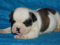Gorgeous,Healthy pups available Now taking deposits to