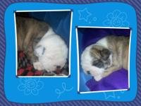 2 pups left: one male is brindle with white mask and