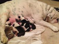 Our sweet Lulu had a trash of 6 puppies Sept. 12, 2014.