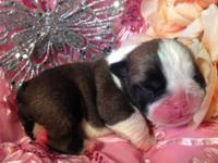 AVAILABLE FEMALE TUBBY 6 Beautiful little babies born
