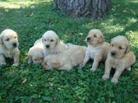 9 darling puppies ready for their forever homes this