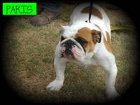 Paris is AKC reg she is crate trained she does good