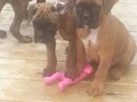 These puppies are looking for a wonderful home.. They