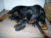 This will be Tara and Able's last litter. Visit my page