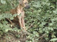 I have a akc fawn female great Dane I rescued her from