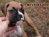 Visit http://www.witsendcanines.com for more