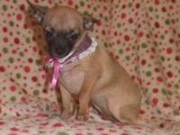 Pixie is a fun loving, genetically small female. She's
