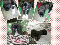 This is Izzy. She is a solid reverse brindle female