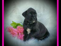 *** Last young puppies until Spring 2015 ***. Akc