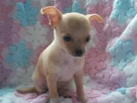 AKC lady born 9/23/14. She has been veterinarian