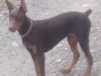 D.O.B.: May 6, 2014 (5 months old). Super Blood Lines,