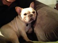 I have a beautiful Female french bulldog available. She