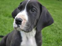 We have 2 female young puppies offered from our