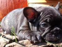Chubs was born August 20, 2015 and is full of wrinkles