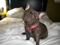 Thank You for you interest in our French Bulldogs. This