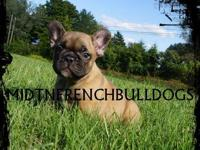 Middle Tennessee French Bulldogs are proud to announce