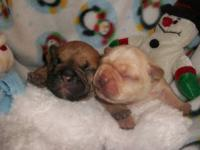 Two Darling babies born 12-17-12. One male (Fawn with