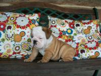 AKC French Bulldog puppies born 06/26/13. They will be