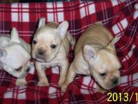 Miss Milan & Mr. Cooper had 7 gorgeous frenchy