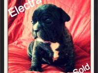 We have three beautiful female French bulldog puppies