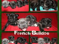 we have Beautiful AKC French Bulldog puppies for sale.