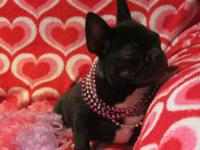 Bruno is a handsome, fawn male french bulldog. He has