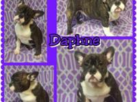 Daphne was born on September 23, 2014 to Coco Chanel