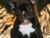 These lovable French Bulldog pups have been family