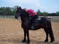 Wally is a beautiful 5years old Friesian gelding. He is