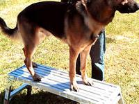 2yr old titled male un-altered german shepherd. Comes