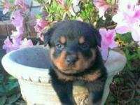 I have 3 lovely large rottie males. looking for a house